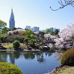a_Shinjuku-Gyoen-National-Garden-a